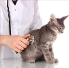 Ветеринарные клиники в Акбулаке